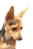 俄国狗玩具 免版税库存照片
