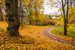 俄国秋天横向 道路在Oranienbaum公园 圣彼德堡 秋天2016年 库存图片
