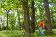 俄国谚语的例证-在失去的三棵杉木中 库存图片