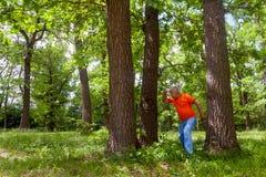 俄国谚语的例证-在失去的三棵杉木 库存照片