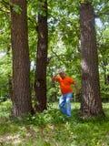 俄国谚语的例证-在失去的三棵杉木 免版税库存图片