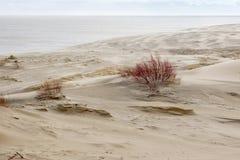 俄国部分库尔斯沙嘴的沙丘在冬天 库存照片