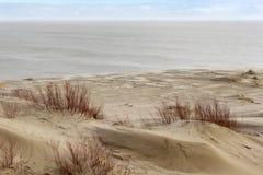 俄国部分库尔斯沙嘴的沙丘在冬天 免版税库存图片