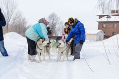 俄国 喀山 2月14日 尾随mushing在雪的西伯利亚爱斯基摩人雪撬队拉扯是在框架外面通过一个冬天的雪撬 图库摄影