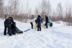 俄国 喀山 2月14日 尾随mushing在雪的西伯利亚爱斯基摩人雪撬队拉扯是在框架外面通过一个冬天的雪撬 免版税图库摄影