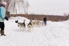 俄国 喀山 2月14日 尾随mushing在雪的西伯利亚爱斯基摩人雪撬队拉扯是在框架外面通过一个冬天的雪撬 免版税库存图片