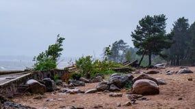 俄国 夏天2016年 风暴在圣彼德堡,芬兰湾的 免版税库存照片