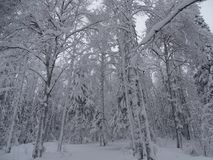 俄国 旅途通过冬天乌拉尔 库存照片