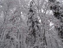俄国 旅途通过冬天乌拉尔 库存图片