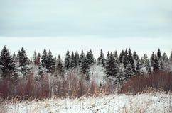俄国 自然在Kinerma村庄在卡累利阿 2017年11月16日 库存照片