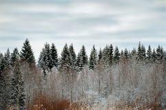 俄国 自然在Kinerma村庄在卡累利阿 2017年11月16日 免版税库存照片