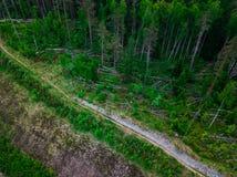 俄国绿色森林顶视图空中射击  免版税图库摄影