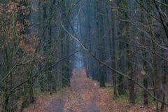 俄国 莫斯科 在城市公园Bitsevsky森林里跟踪撒布与秋叶 免版税库存照片