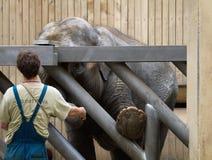 俄斯拉发动物园 免版税库存照片