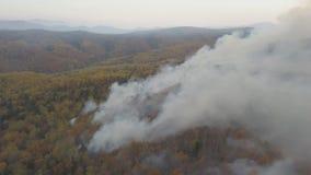 俄罗斯森林火灾,外贝加尔森林火灾 股票视频