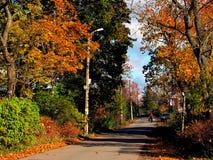 俄罗斯,圣彼德堡,秋天在Gatchina公园 图库摄影