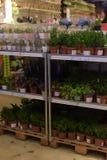 俄罗斯,圣彼德堡, 15,03,2015棵盆的植物在的待售 免版税图库摄影