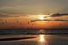 俄罗斯,海鸥,鸟,云彩,光束,黄昏,日落,反射,波纹 库存图片