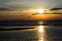 俄罗斯,海鸥,鸟,云彩,光束,黄昏,日落,反射,波纹 免版税库存图片