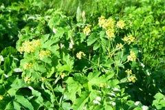 俄罗斯,符拉迪沃斯托克,Shkot海岛的植物群  ?? 免版税库存图片
