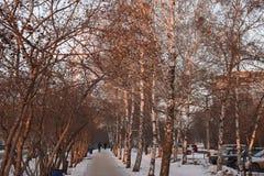 俄罗斯,胡同,桦树,花揪,传球手,汽车 免版税库存照片