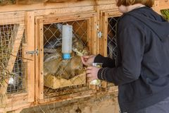 俄罗斯,苏兹达尔, 2017年9月 孩子哺养在一只笼子的兔子从他们的手 图库摄影