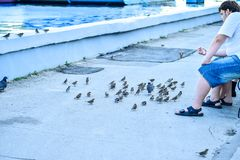 俄罗斯,萨拉托夫- 09 08 2017年:未知的人坐长凳并且喂养在伏尔加河堤防的鸽子在萨拉托夫08 09 2017年, i 免版税库存照片
