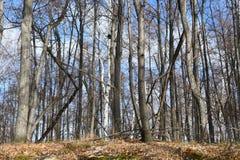 俄罗斯,车里雅宾斯克地区 湖Uvildy岸的混杂的森林在晴朗的11月天 免版税库存照片