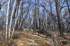 俄罗斯,车里雅宾斯克地区 湖Uvildy岸的混杂的森林在晴朗的11月天 库存照片
