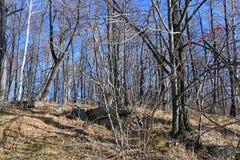 俄罗斯,车里雅宾斯克地区 湖Uvildy岸的混杂的森林在晴朗的11月天 免版税库存图片