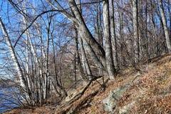 俄罗斯,车里雅宾斯克地区 湖Uvildy岸的混杂的森林在晴朗的11月天 免版税图库摄影