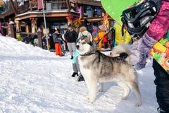 俄罗斯,Sheregesh 2018年 11 17个挡雪板和滑雪者有相当的 免版税图库摄影