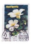 俄罗斯-大约1977年:在展示打印的邮票西伯利亚 免版税库存图片