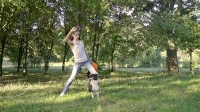 俏丽的博德牧羊犬显示灰棕色的把戏在前面的在拿着一个猛烈飞碟的女孩经理前面 股票视频