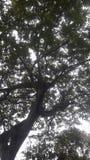 俏丽的树 免版税库存照片
