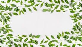 俏丽的框架由绿色分支和叶子制成在白色背景 平的位置,顶视图,水平 免版税库存照片