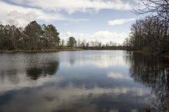 俏丽的池塘 免版税图库摄影