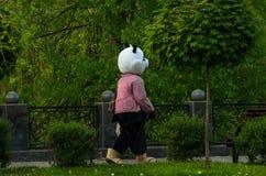 俏丽的熊猫 库存图片