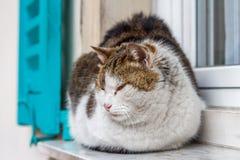 俏丽的猫坐窗口;La Turbie村庄,普罗旺斯 免版税库存图片