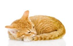 俏丽的猫睡眠。 库存照片