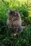俏丽的猫 库存图片