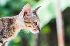 俏丽的猫 库存照片