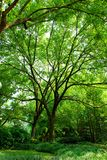 俏丽的结构树 库存图片