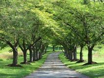 俏丽的车道在农村马里兰 免版税库存图片