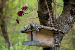 俏丽的鸟房子 免版税库存照片