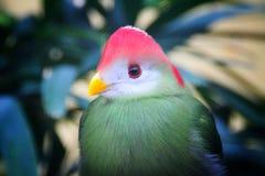 俏丽的鸟 免版税库存照片