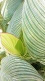 俏丽的florals绿色 免版税库存图片