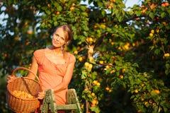 俏丽,少妇被点燃的采摘杏子 免版税库存照片