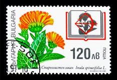 保加利亚红色书,植物群serie植物,大约1997年 图库摄影