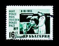 保加利亚邮票显示挤奶的妇女和母牛,国际妇女天,大约1955年 免版税库存图片